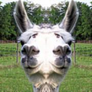 Llama  Fun Head Games Art Print