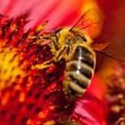 Loads Of Bee Pollen Art Print