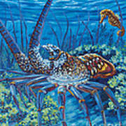 Lobster Season Art Print