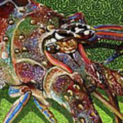 lobster season Re0027 Art Print by Carey Chen