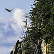 Lofty Bald Eagle Surveys Maines Bold Coast Art Print