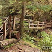 Log Bridge In The Rainforest Art Print