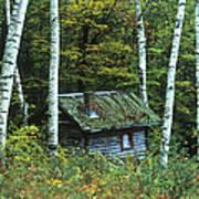 Log Cabin In The Birch Forest Vermont Art Print