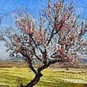 Lone Almond Tree In Bloom Art Print