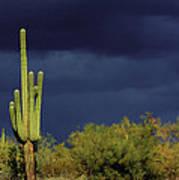 Lone Cactus Sentry Art Print