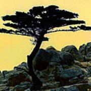 Lone Cypress Companion Art Print