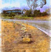 Lone Cypress From Palos Verdes Art Print