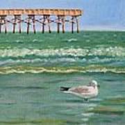 Lone Gull A-piers Art Print