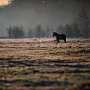 Lone Horse Art Print