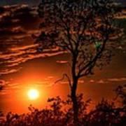 Lone Manzanita Sunset Art Print