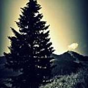 Lone Mountain Pine Art Print