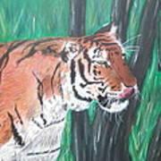 Lone Tiger Art Print