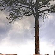 Lone Tree 11351 Art Print