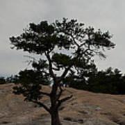 Lone Tree In Stone Mountain State Park North Carolina Art Print