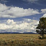 Lone Tree In The Grand Teton National Park Art Print