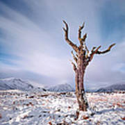 Lone Tree In The Snow Art Print