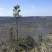 Lone Tree Kilauea Crater Art Print