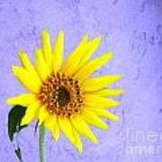 Lone Yellow Daisy Art Print