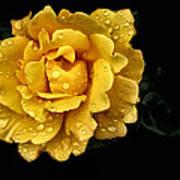 Lone Yellow Rose Art Print