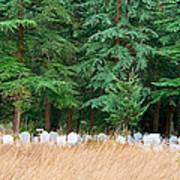 Lonely Graveyard Under Pine Trees Art Print