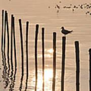 Lonely Gull Art Print