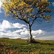 Lonely Tree In Mountain Art Print