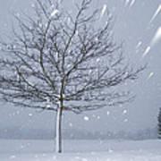 Lonely Tree In Snow Bavaria Art Print