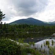 Lonesome Pine At Sandy Stream Pond Art Print