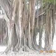 Long Branches Art Print
