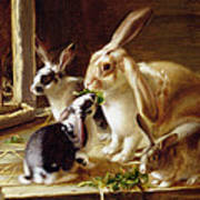 Long-eared Rabbits In A Cage Watched By A Cat Art Print by Horatio Henry Couldery