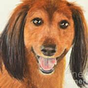 Long Haired Dachshund Art Print