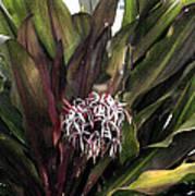Long Leaf Explosion Art Print