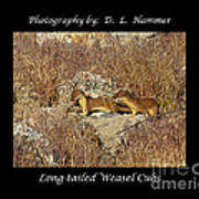 Long-tailed Weasel Cubs Art Print