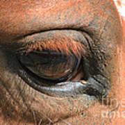 Look Into My Eye Art Print