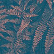 Looking At Ferns Another Way Art Print