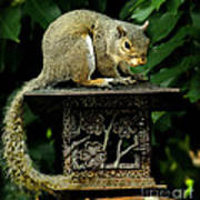 Looking For Nuts Art Print