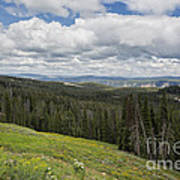 Looking To The Canyon - Yellowstone Art Print