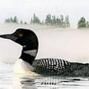Loon In Fog Art Print