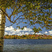 Loon Lake In Autumn With White Birch Tree Art Print