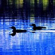 Loons In Pittsburg Art Print by Will Boutin Photos