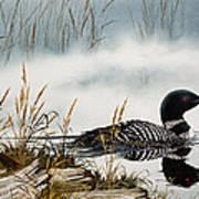 Loons Misty Shore Art Print