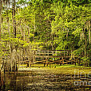 Lost Bridge On Caddo Lake Art Print