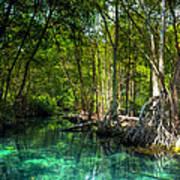 Lost Lagoon On The Yucatan Coast Art Print