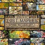 Lost Maples Collage Art Print