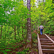 Lots Of Steps On La Chute Trail In Forillon Np-qc Art Print