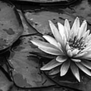 Lotus 2 Art Print