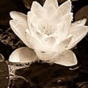 Lotus Blossom Art Print by John Pagliuca