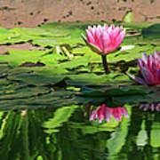 Lotus Flower Reflections Art Print