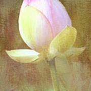 Lotus Looking To Bloom Art Print