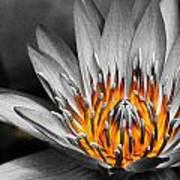Lotus On Fire Art Print